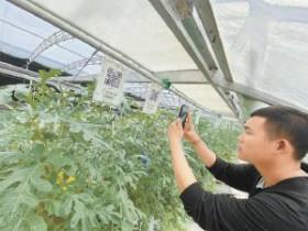"""北京通州于家务:""""种业硅谷""""里不一样的丰收节"""